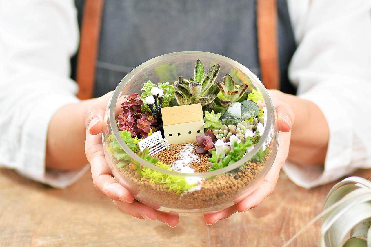 多肉植物玻璃組合