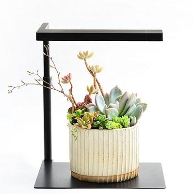 春之饗宴+多肉植物燈 1