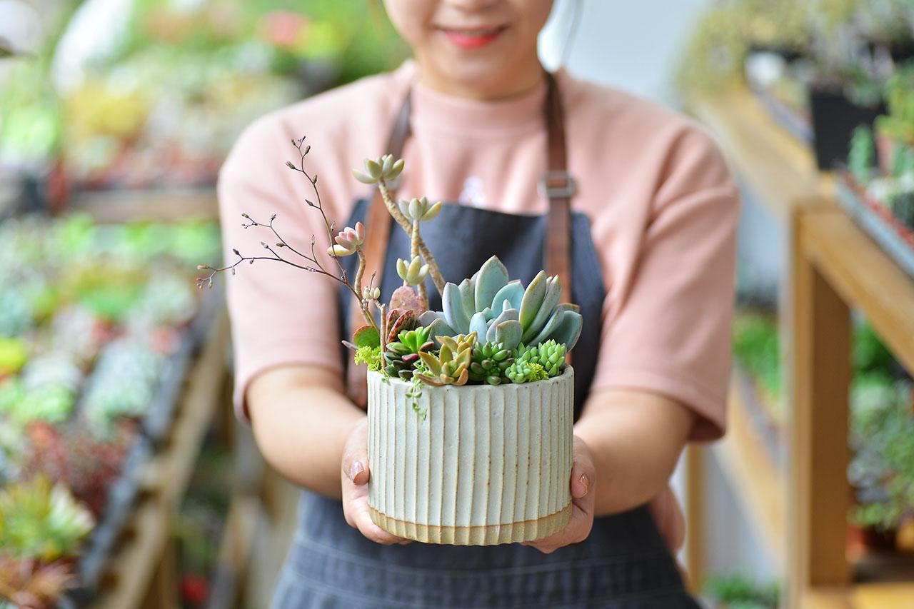 春之饗宴+多肉植物燈 10