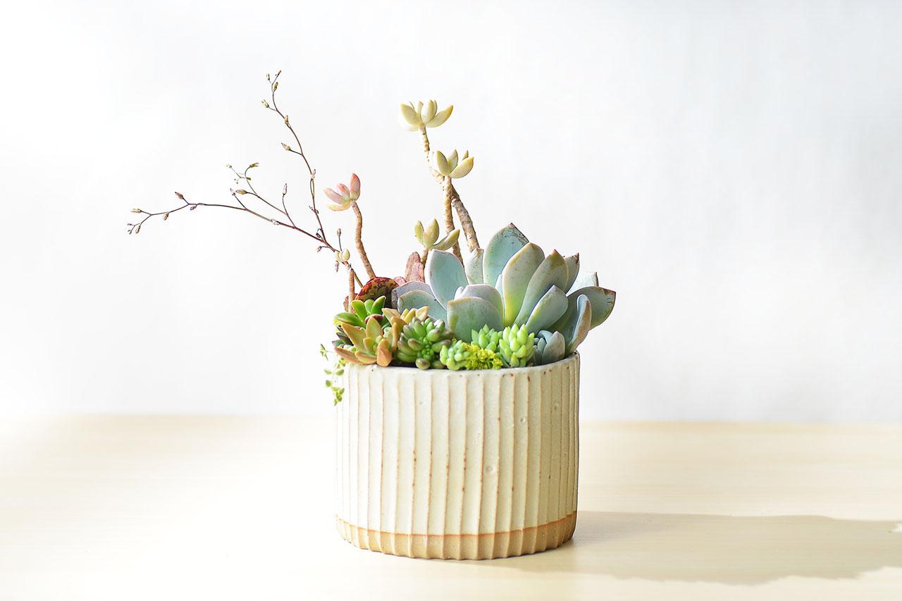春之饗宴+多肉植物燈 5