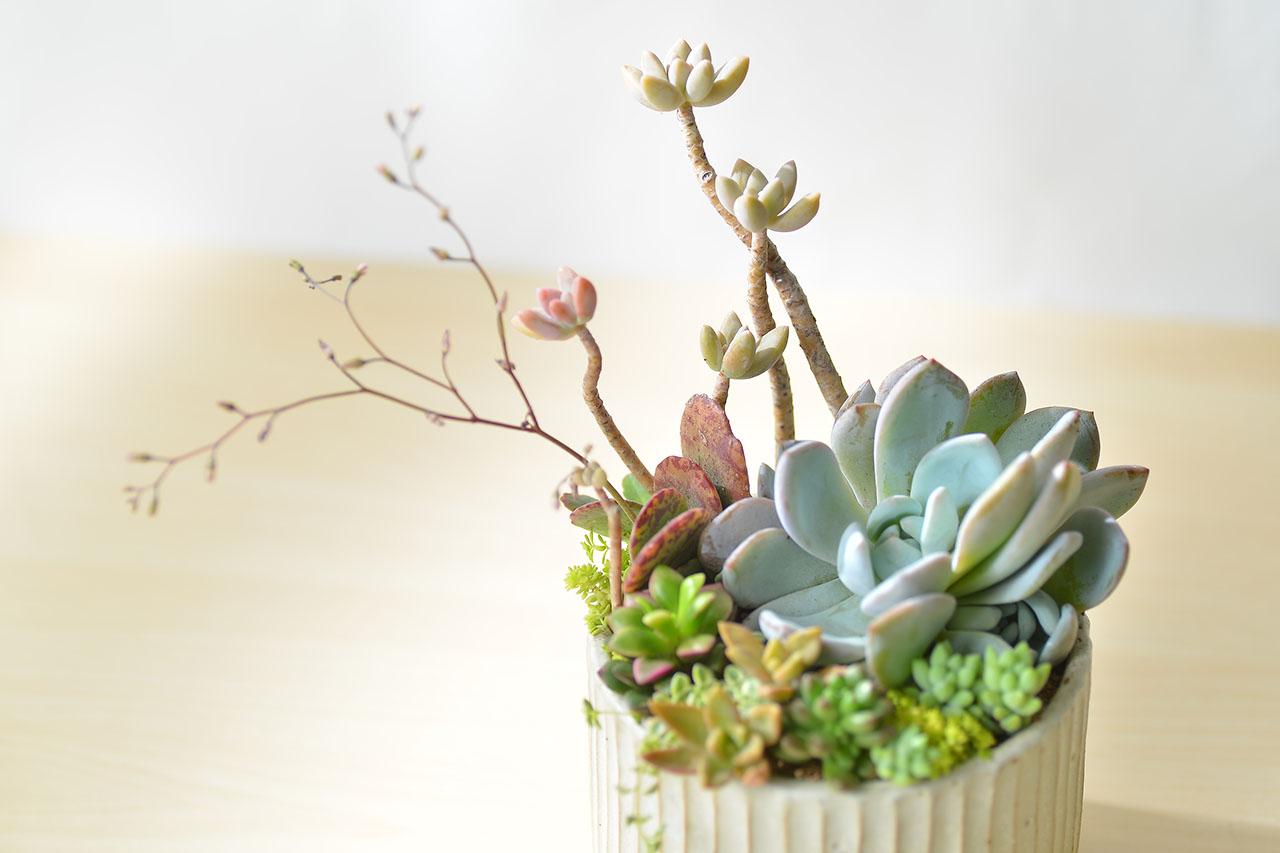 春之饗宴+多肉植物燈 7