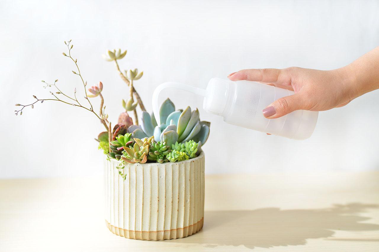 春之饗宴+多肉植物燈 8