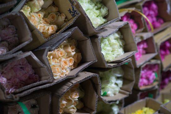 越南玫瑰花