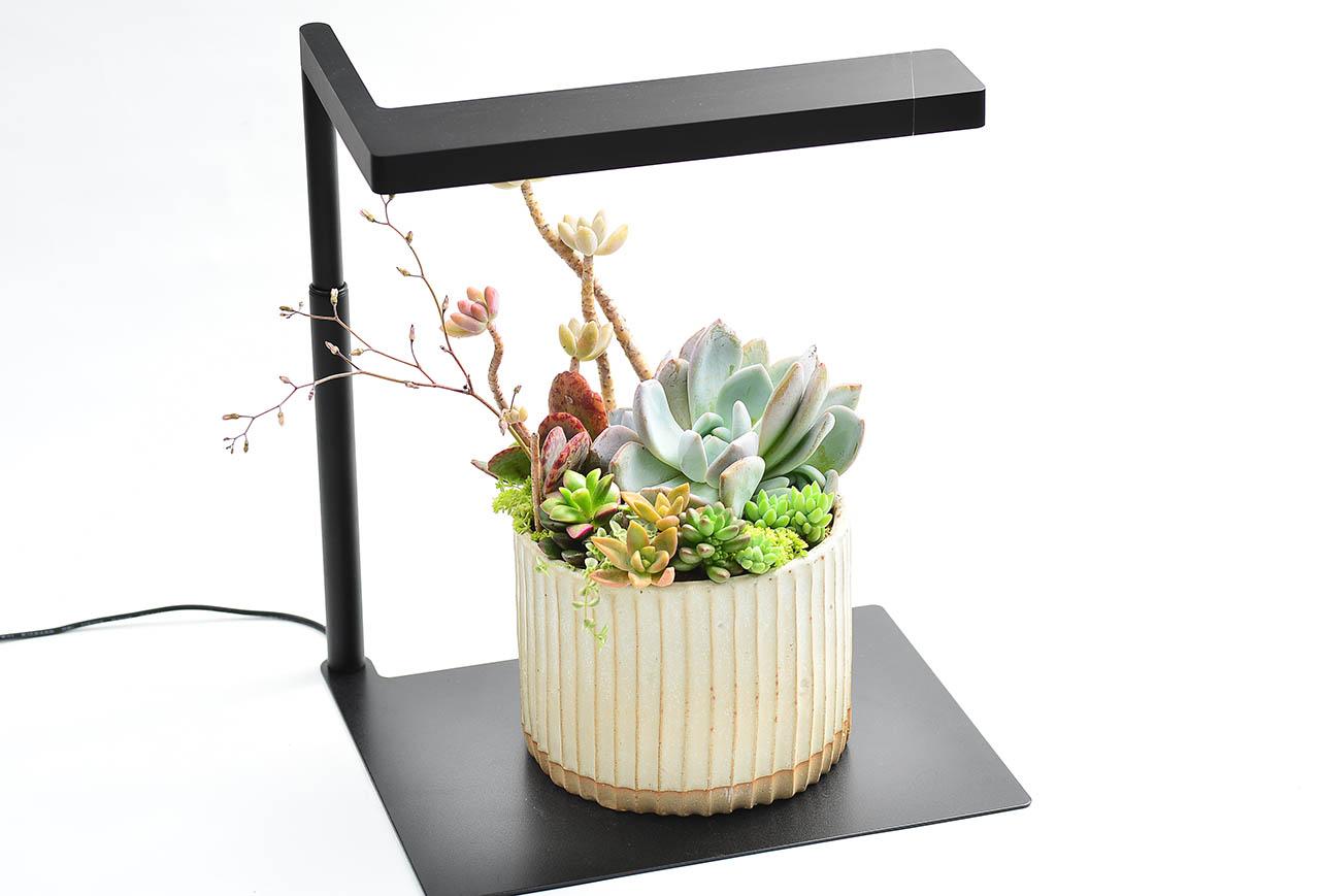 適合送禮的多肉植物燈
