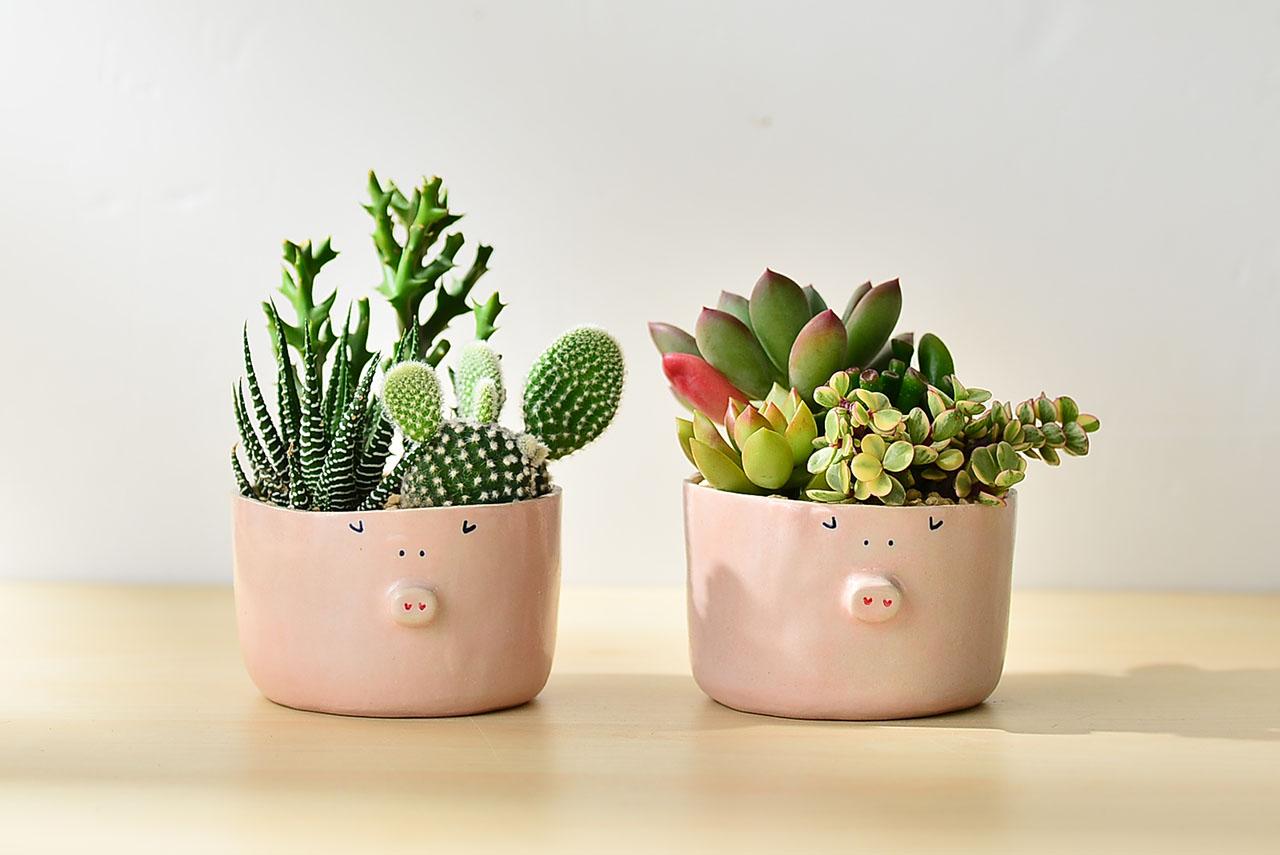 仙仙小豬寶 - 生日禮物 1
