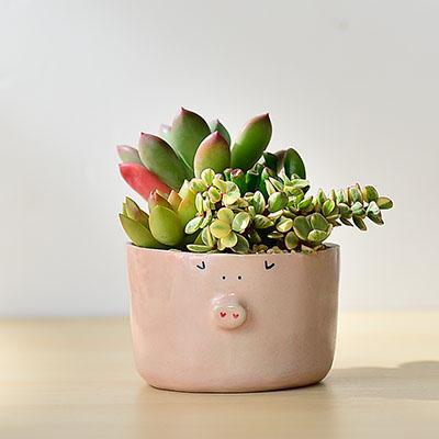 豬豬肉寶生日盆栽