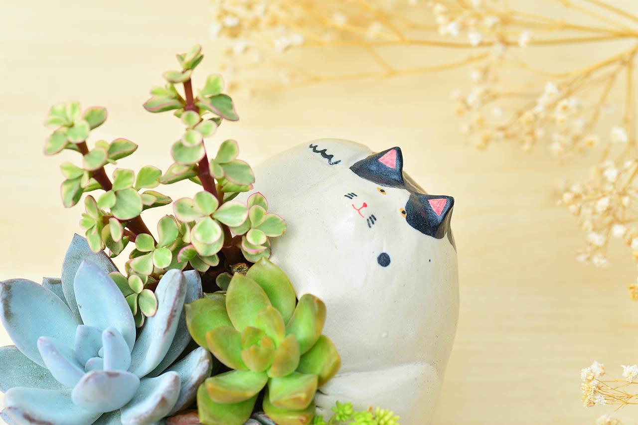 招財貓圖案盆栽