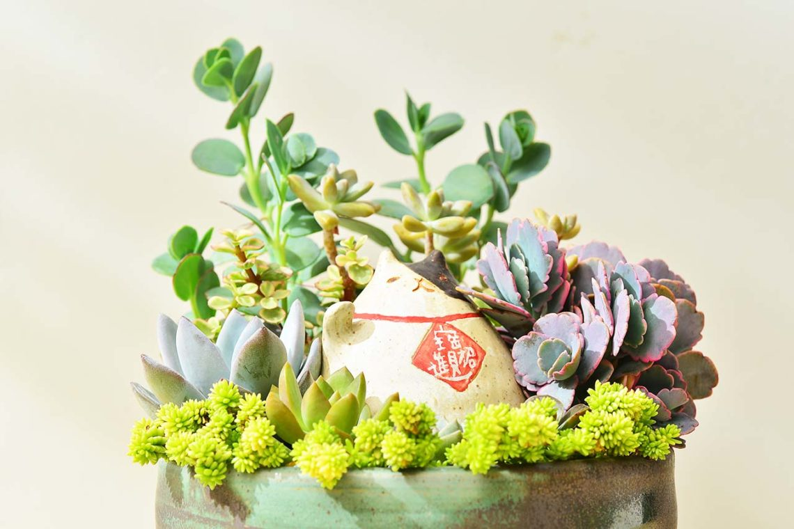有肉 Succulent & Gift - 官方網站 6