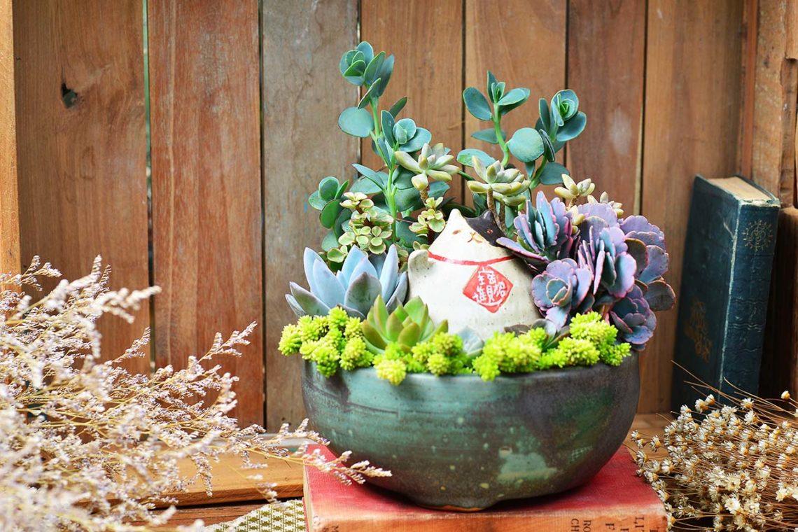 開幕盆栽到台中!多肉植物盆栽可療癒可帥氣,還有空氣鳳梨盆栽可以選擇,不論是送到台中、豐原還是大里,甚至是彰化都統一運費,是蘭花盆栽或傳統花籃之外的新選擇喔