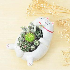 開幕開店送禮招財貓盆栽-躺著賺貓貓
