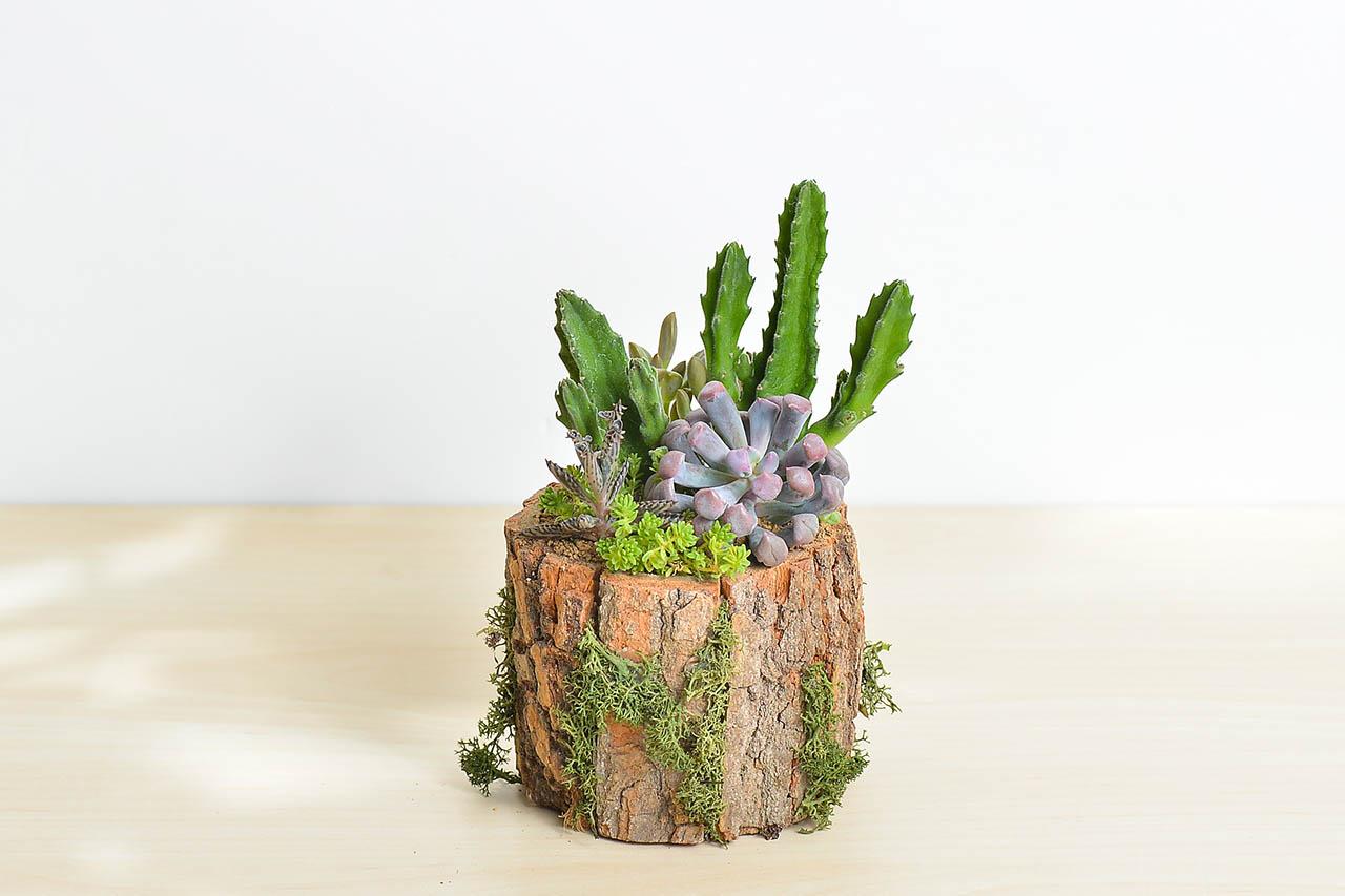 桌上型盆栽木盆