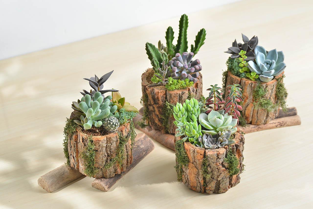 辦公桌盆栽