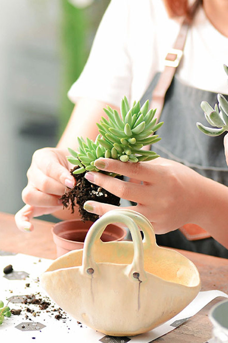家庭日-植物手作日 4