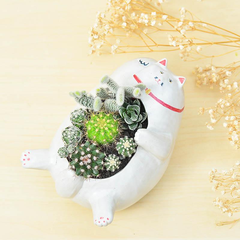 有肉 Succulent & Gift - 官方網站 10
