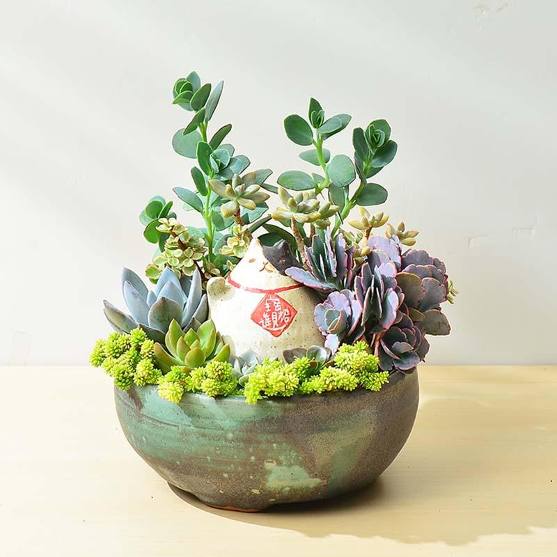 有肉 Succulent & Gift - 官方網站 8