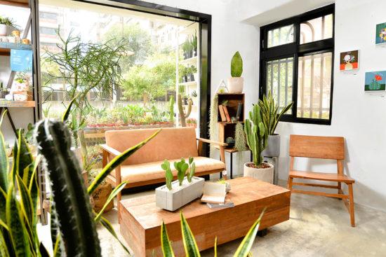 室內植物佈置