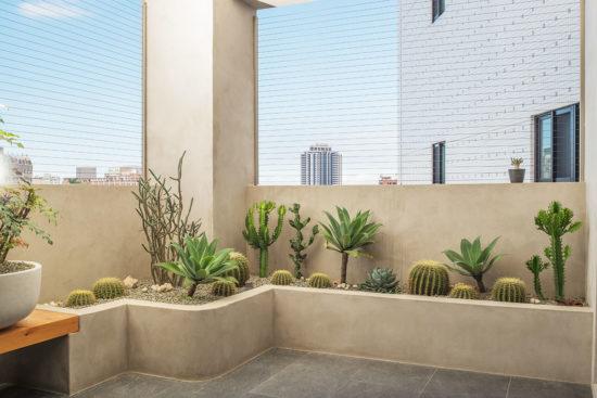 熱帶植物盆栽