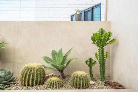 熱帶植物名稱:仙人掌