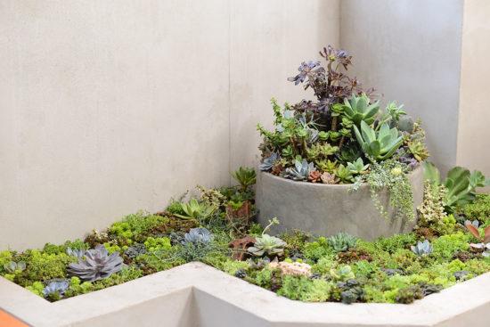 綠色植物佈置