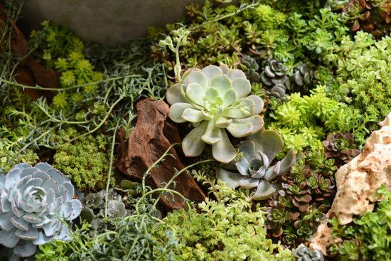 花園整理小技巧