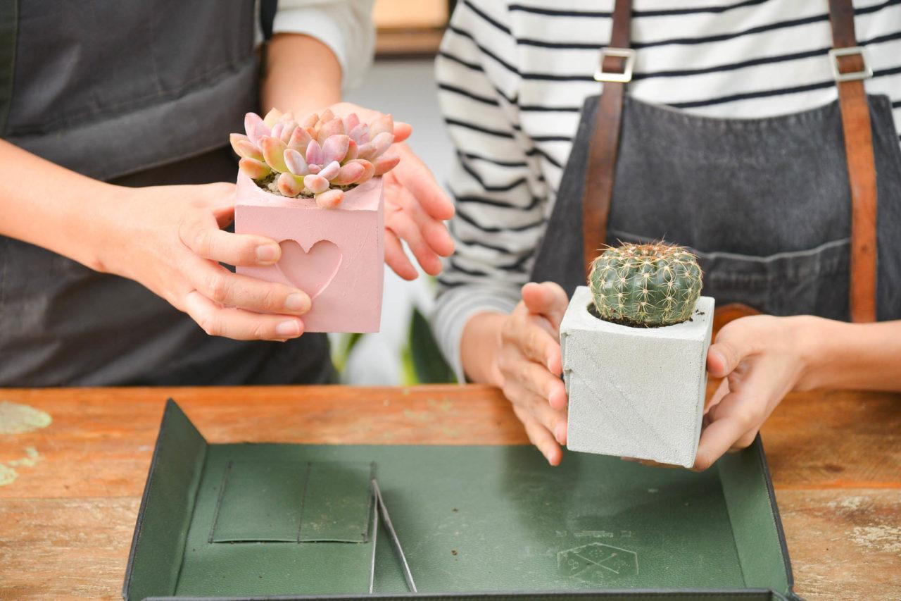 succulents workshop