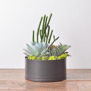 植感好禮 - 招貴人盆栽 1