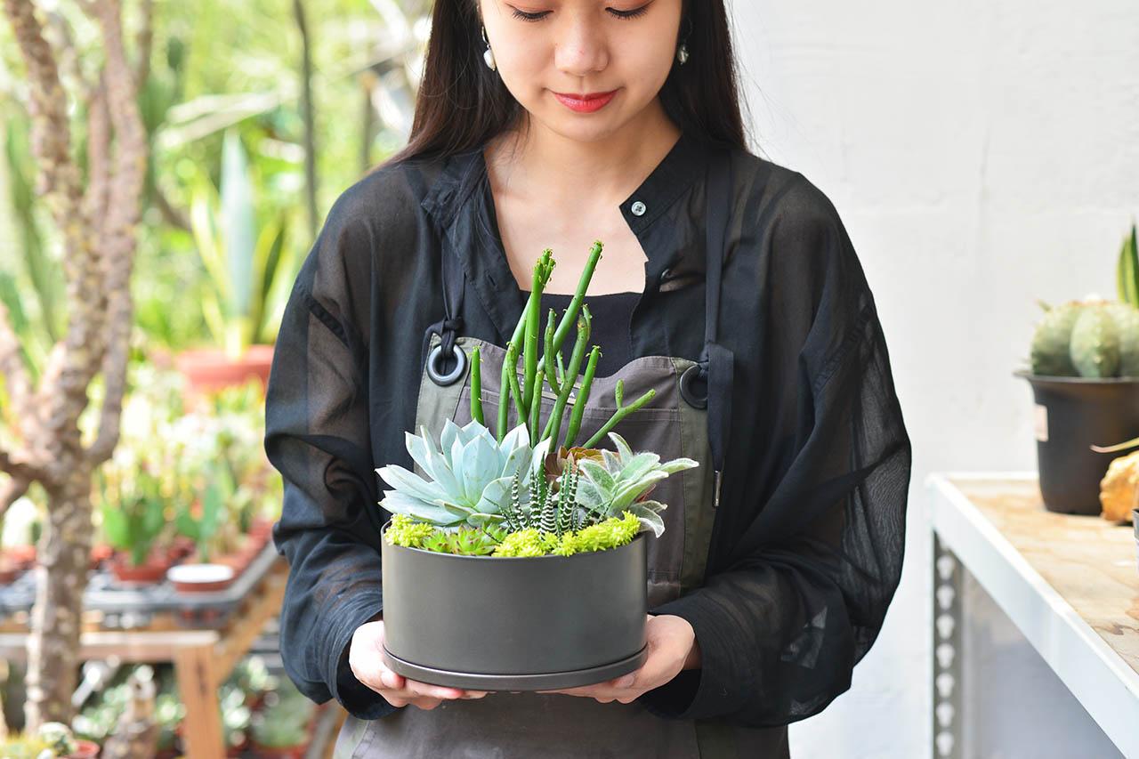 植感好禮 - 招貴人盆栽 7