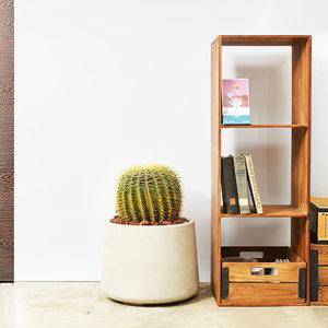 金琥-大型植物送禮盆栽 大型植物送禮盆栽9