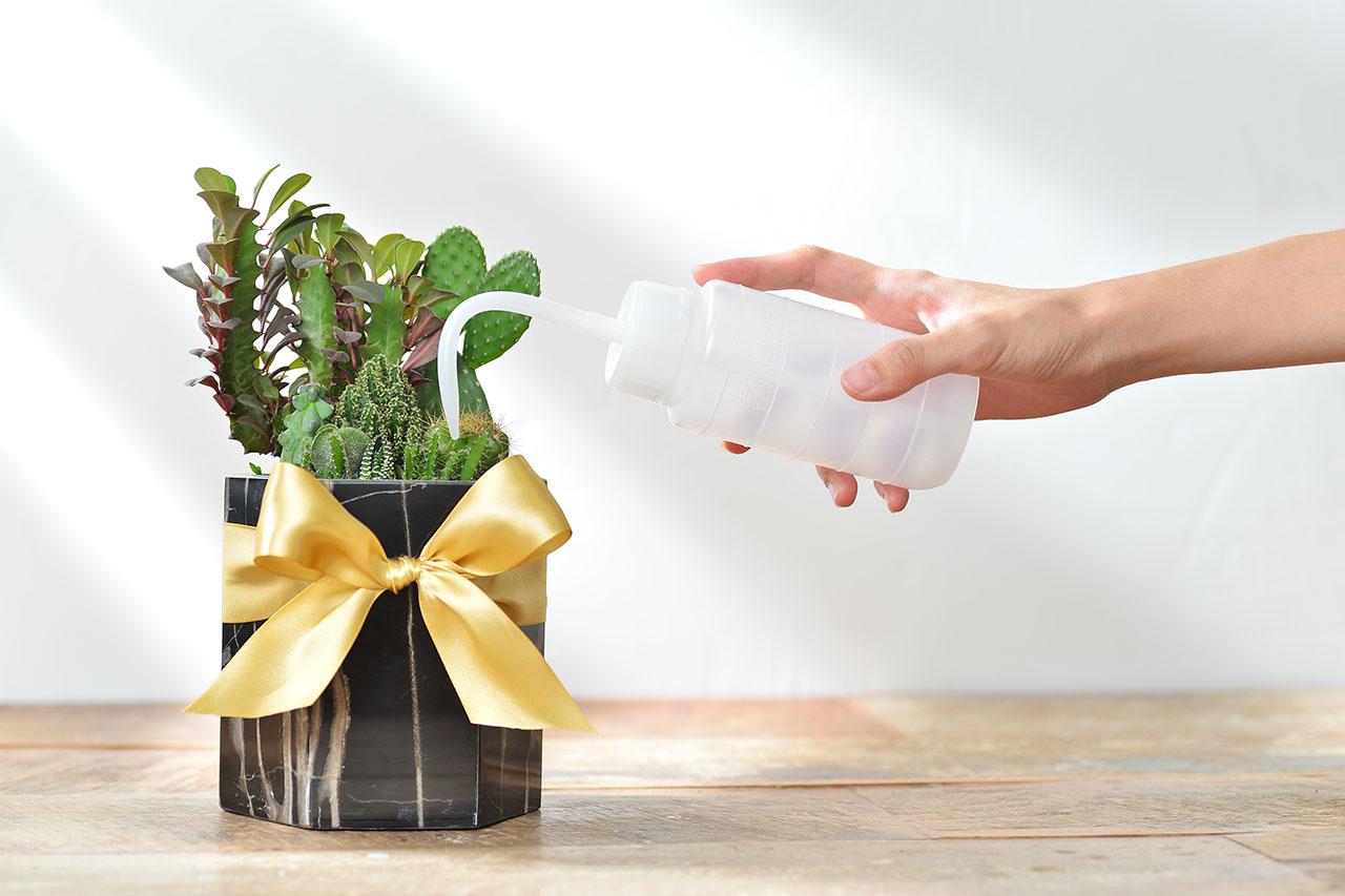 多肉植物多肉植物盆栽照顧
