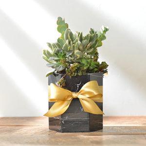 黑色大理石盆栽
