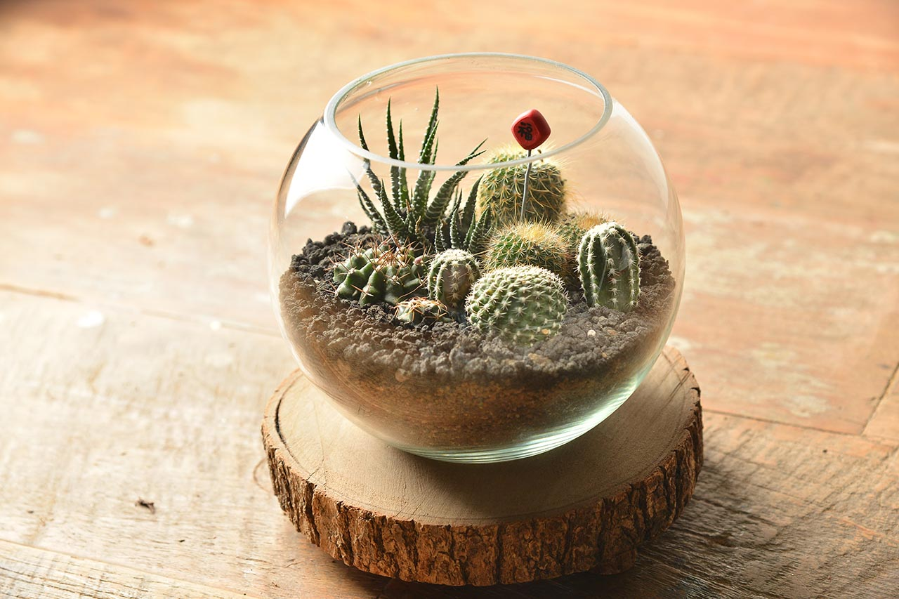 客製化多肉盆栽禮贈品 - 其他材質案例 0606 企業活動包班玻璃球植栽手作 032