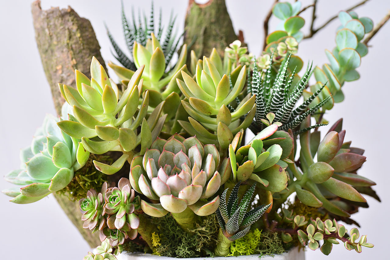 succulent & concret pot
