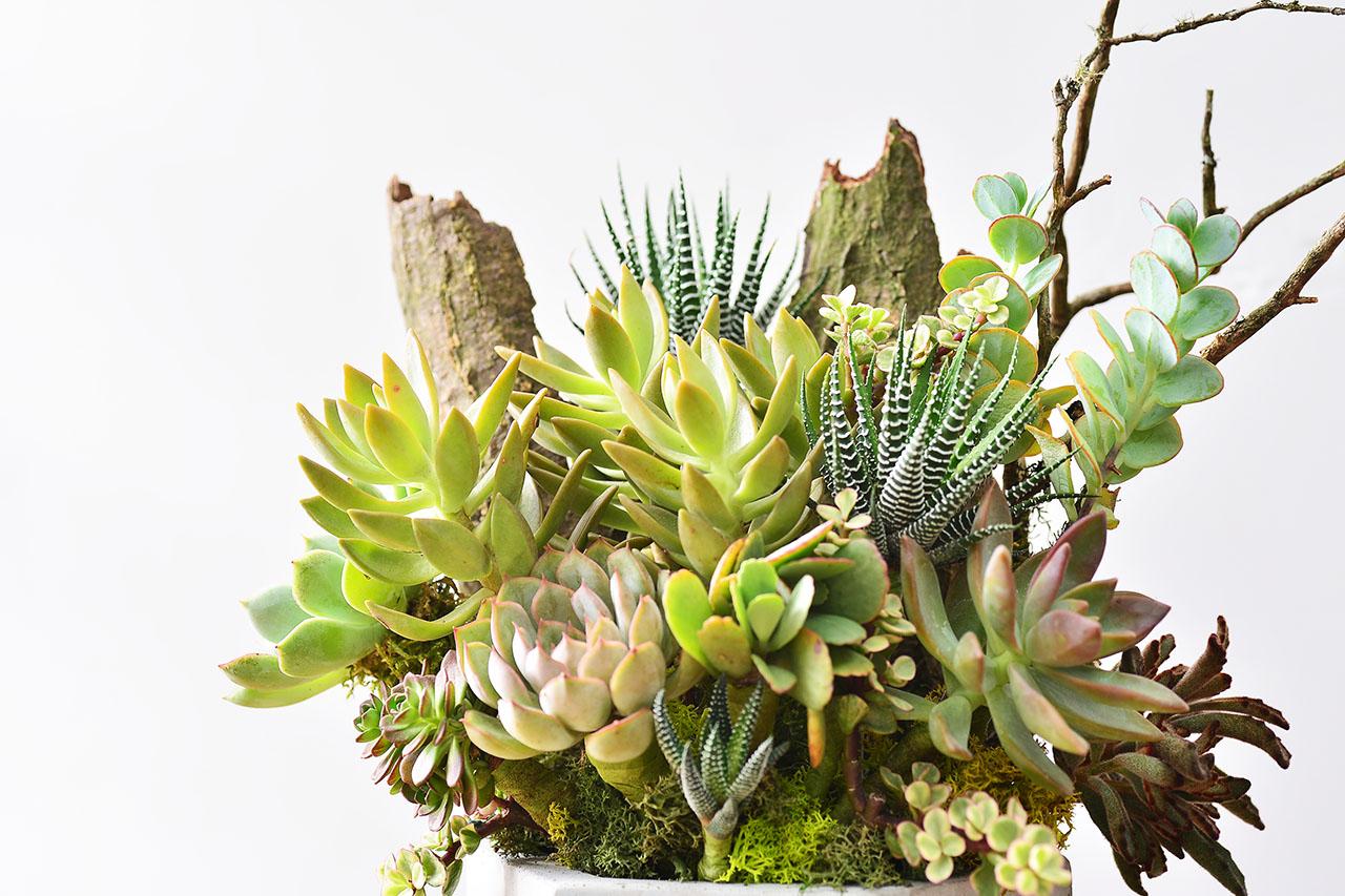 succulent florist