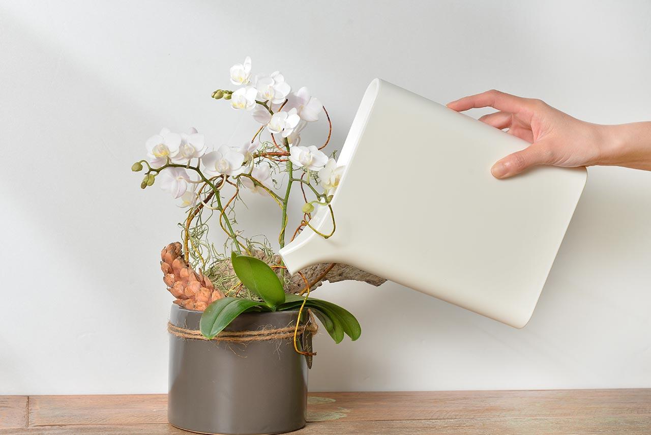 植株照顧與澆水器