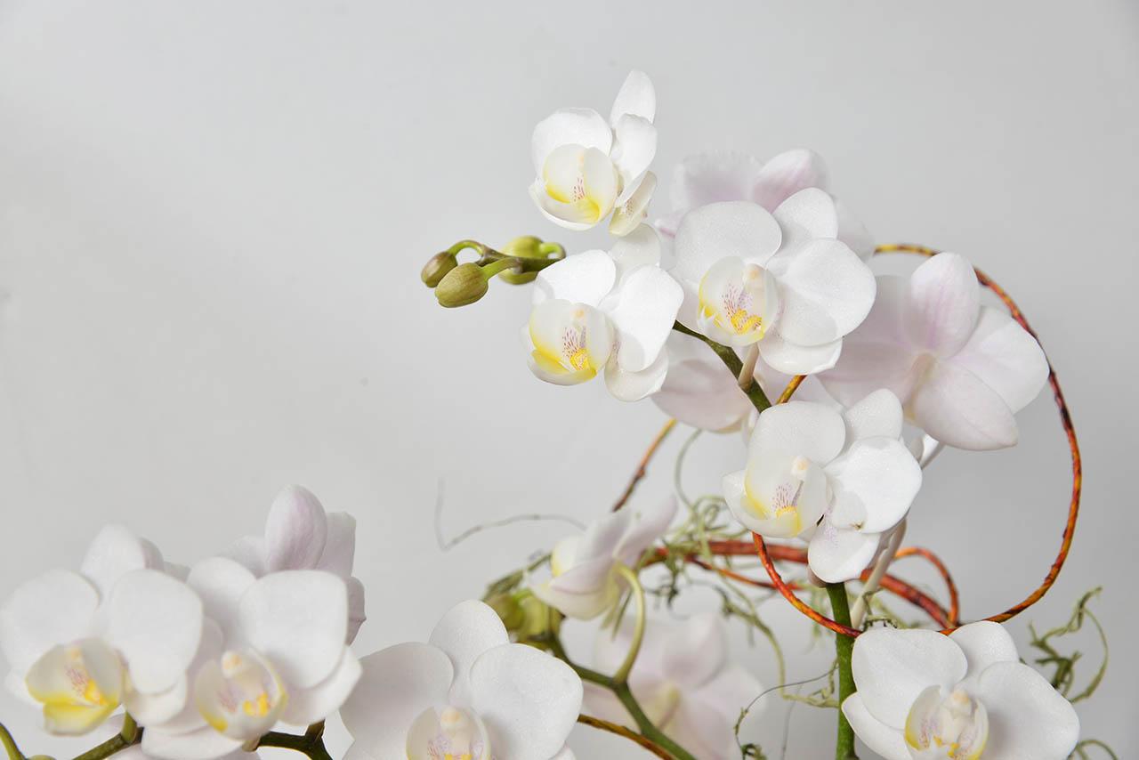 日式白花盆栽