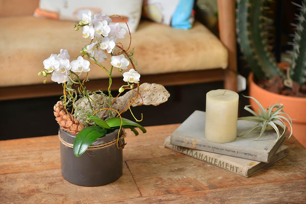 室內蘭花盆栽