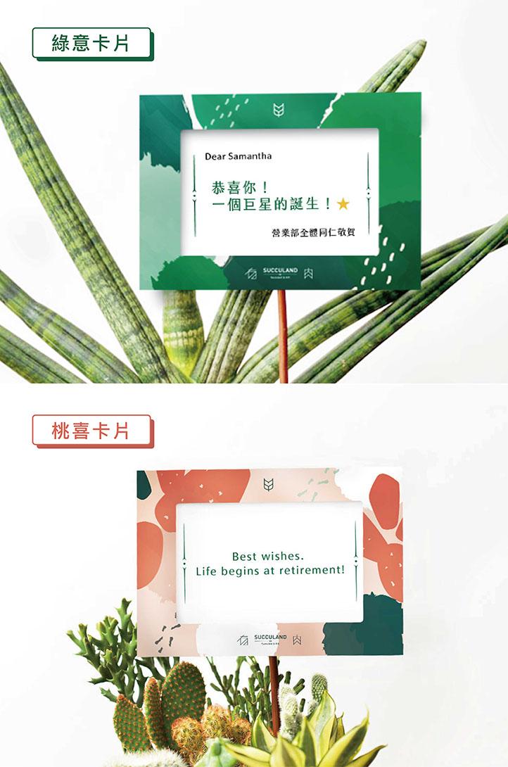 胖鳳梨 - 發財樹成雙組 01