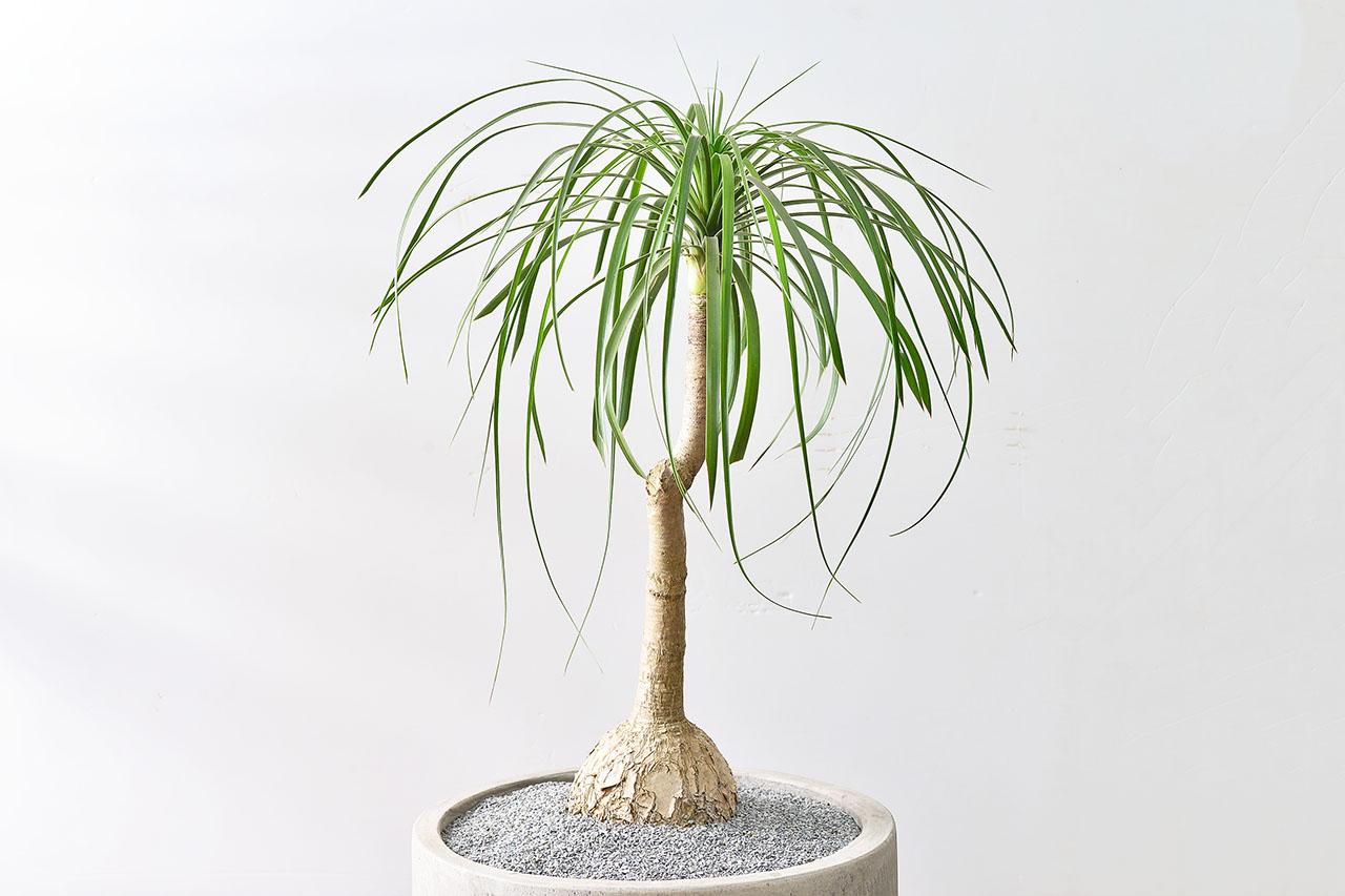 典雅的室內盆栽
