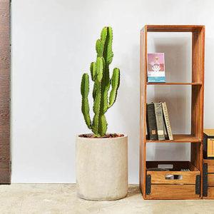 上帝閣-大型植物送禮盆栽10