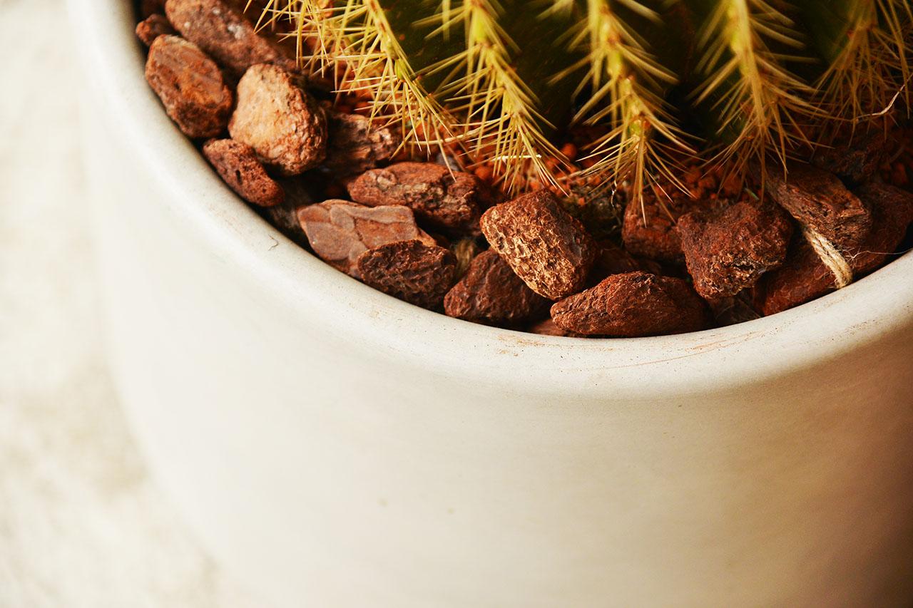 堅石之境 - 龍骨大理石盆栽 大型植物送禮盆栽6