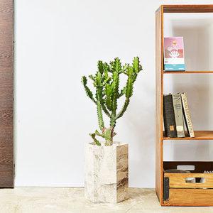 龍骨中斑-大型植物送禮盆栽7