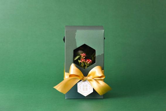 綠意新年禮盒