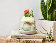 教你如何選網路花店、挑開幕盆栽? 9