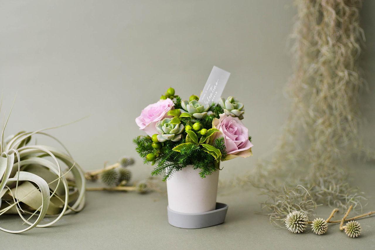 succulent & rose