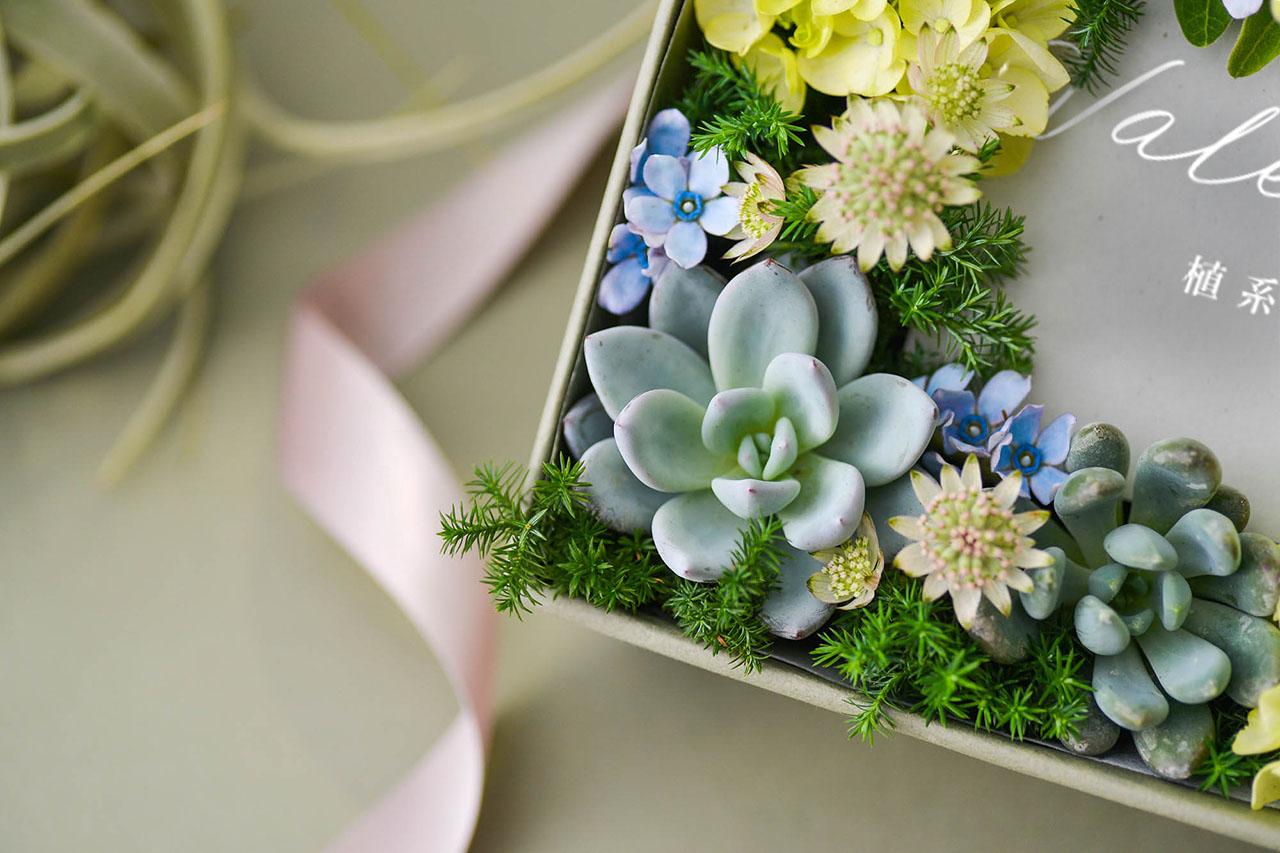 粉藍色多肉植物