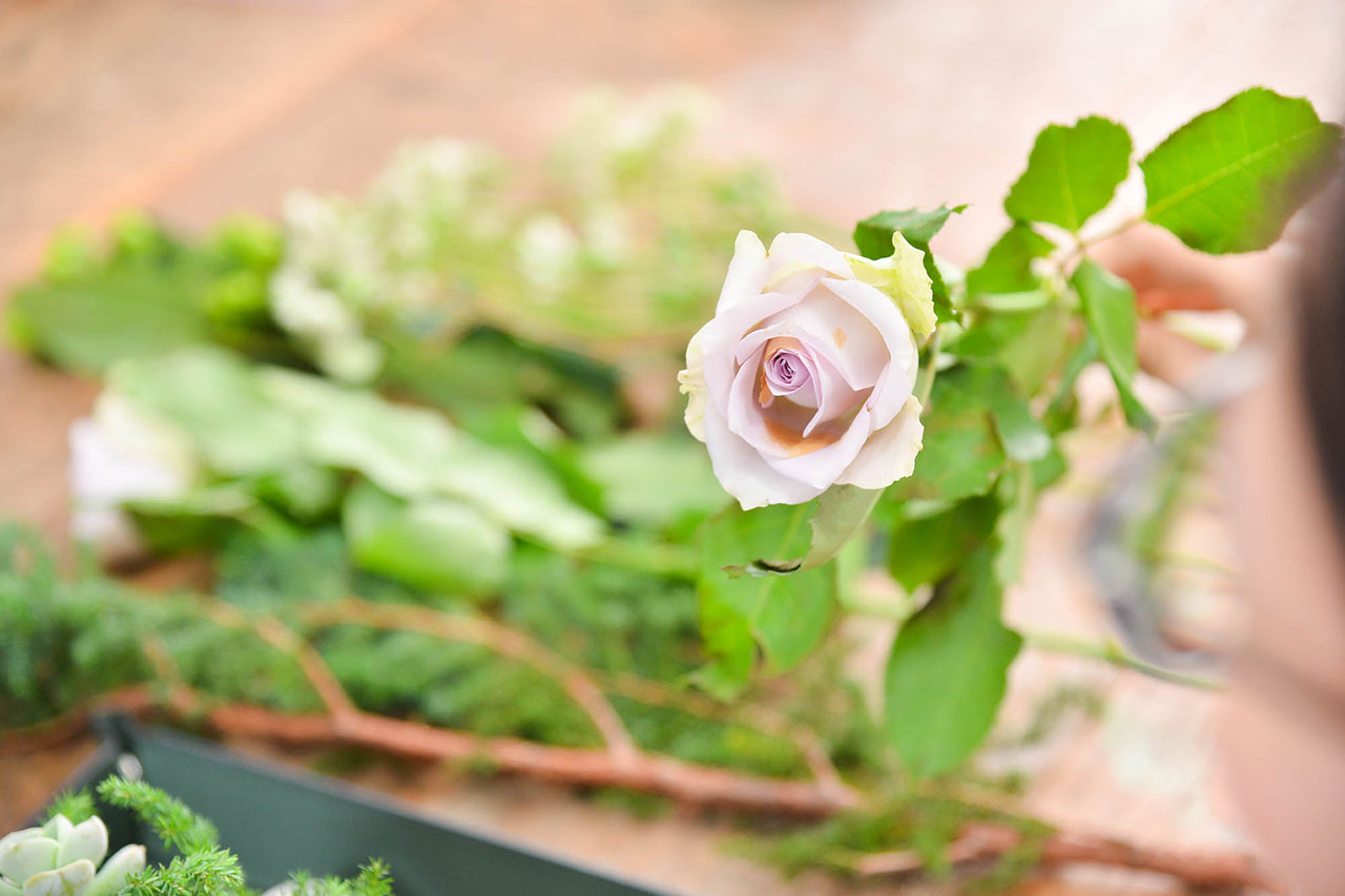 玫瑰花 台北