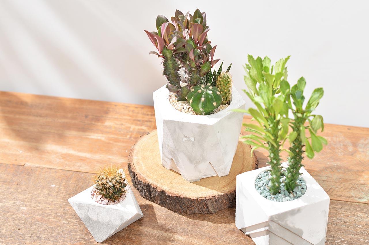 [ 水泥課程 ] 幾何水泥盆栽製作 & 多肉植栽 4