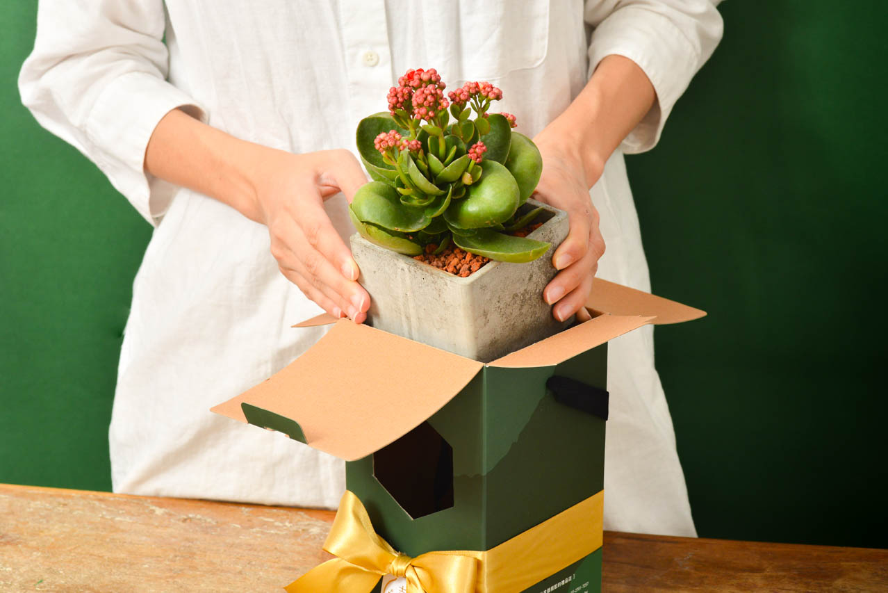 彩綠 - 吉祥長壽禮盒 1113 春節花禮盒 169