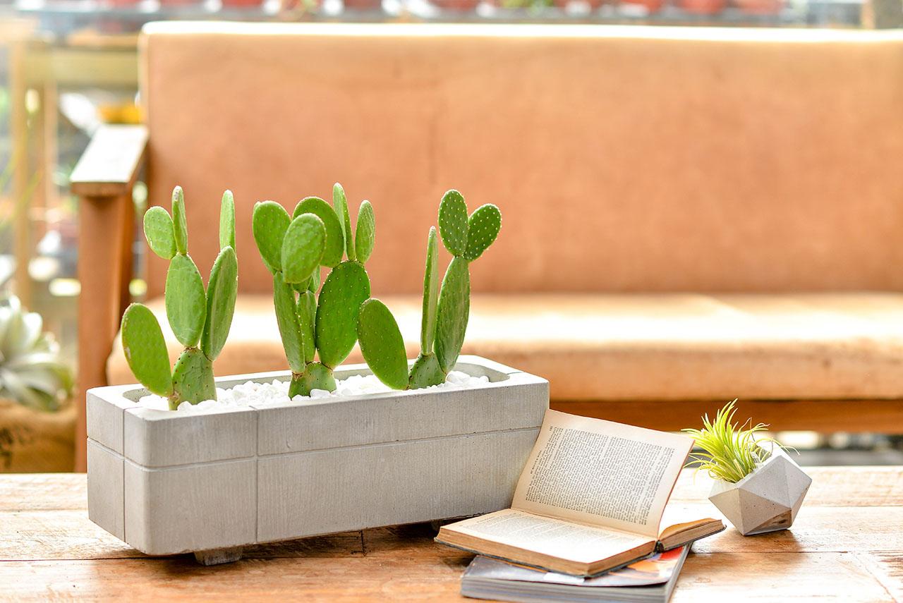 療癒仙人掌盆栽