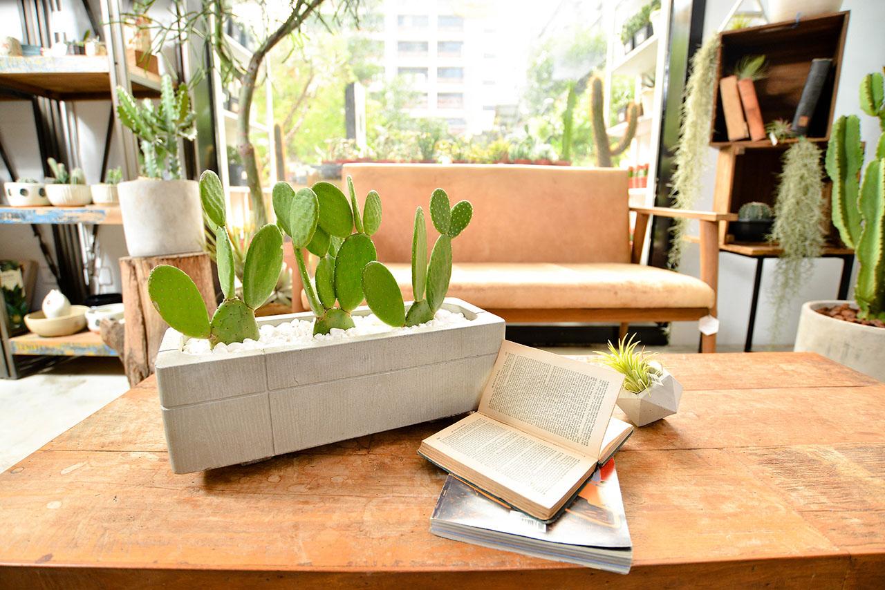 桌型桌上型盆栽
